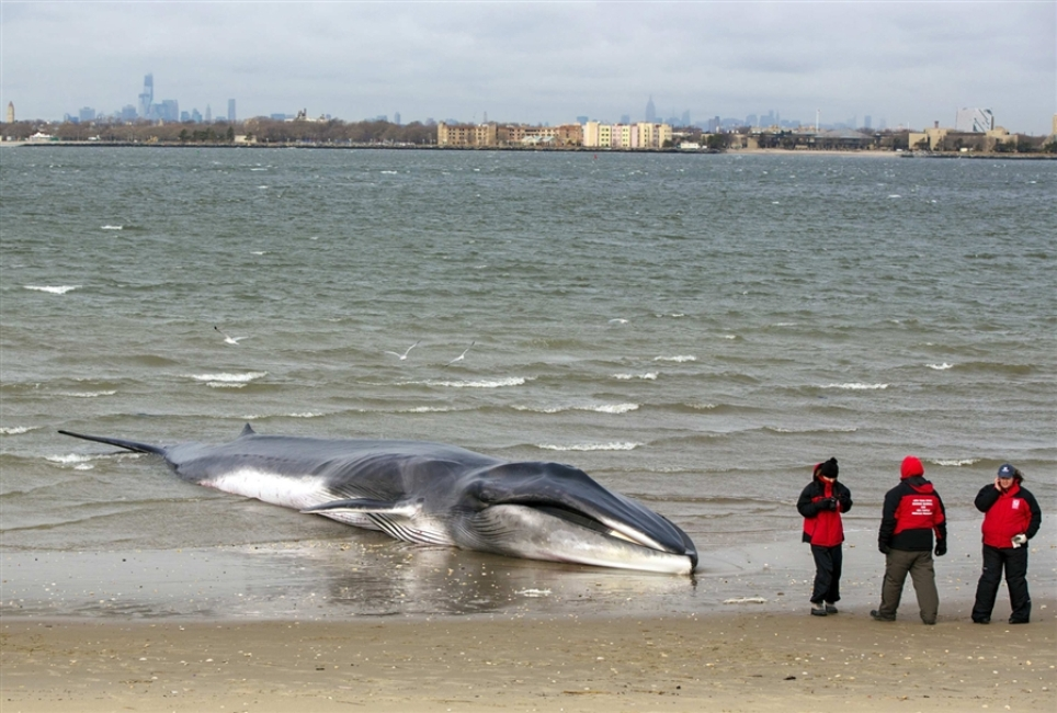 pb-121227-beached-whale-01a.photoblog900