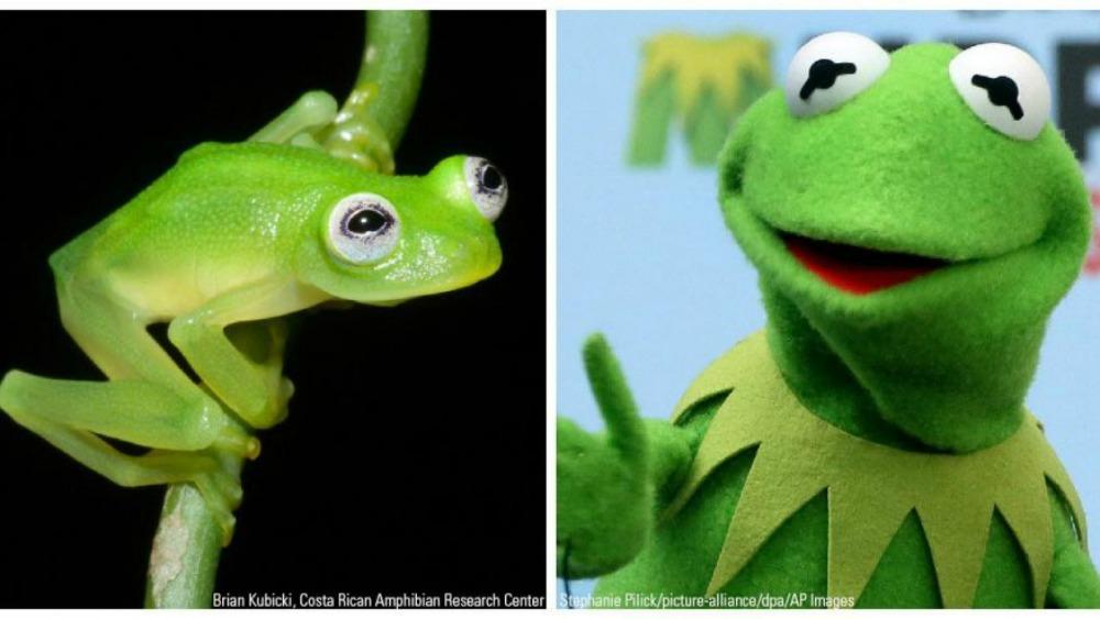 Kermit_CREDIT2