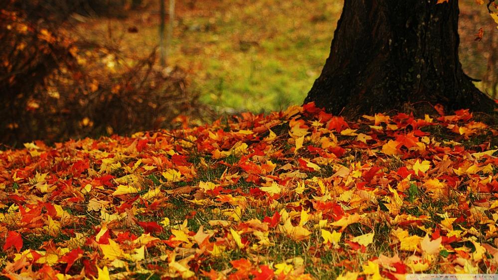 autumn-leaves-wallpaper-15644